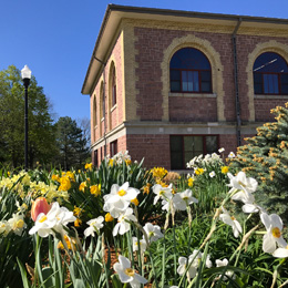 Campus building and landscape with daffodils in the foreground.